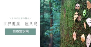 【世界遺産 屋久島】縄文杉だけじゃない!もののけ姫の舞台『白谷雲水峡』