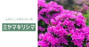 九州にしか咲かないミヤマキリシマを見るならこの山!!